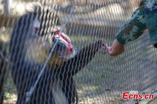 Forest zoo offers autumn treat to animals